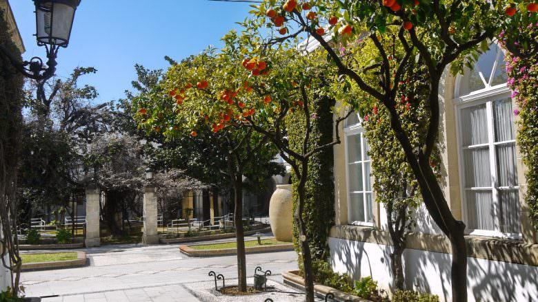 Orangenbäume im Innenhof der Bodega Osborne