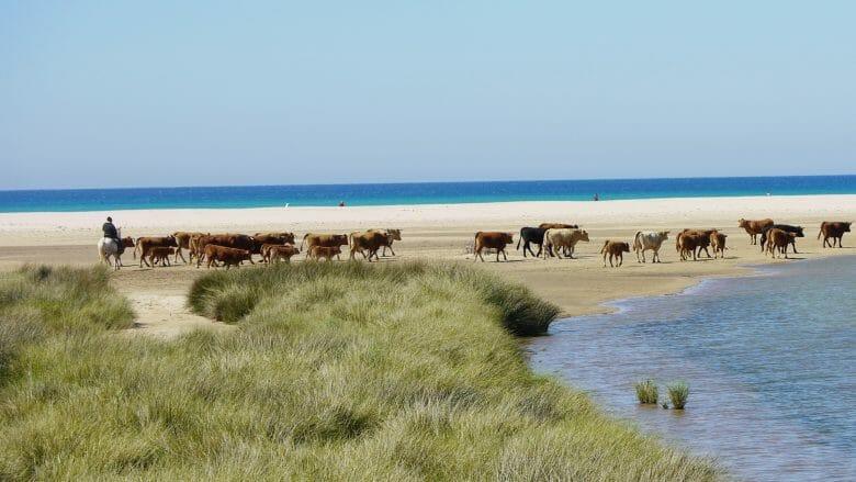Playa Los Lances bei Tarifa