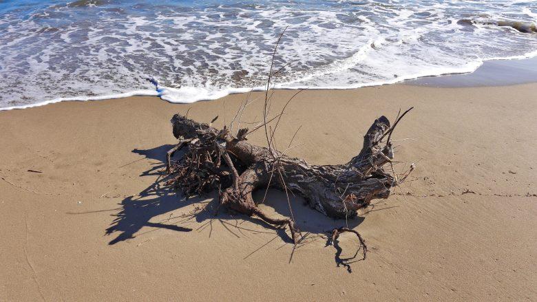Strandgut am Strand von Sant Pere Pescador