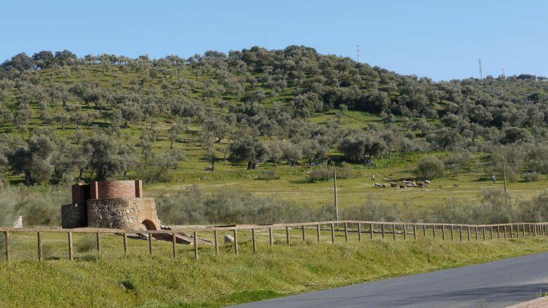 Dehesa in der Sierra de Aracena