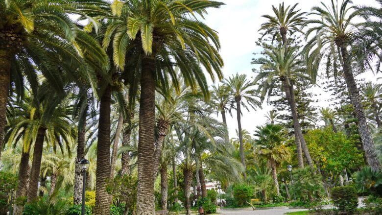 Palmenwald von Elx (Elche)