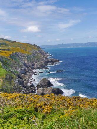 Blumen, Felsen und blaues Meer
