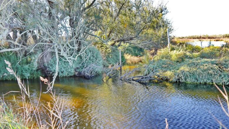 Im Naturpark Aiguamolls de l'Empordà