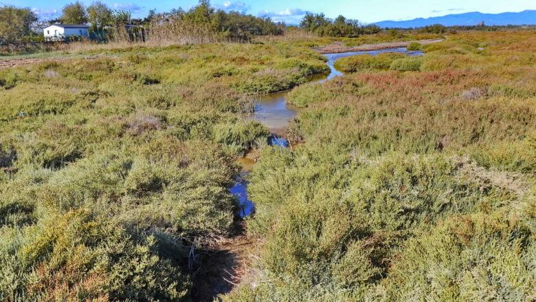 Feuchtgebiete im Naturpark Aiguamolls de l'Emprorà