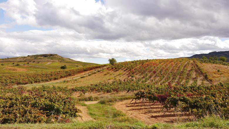 Weinberge in der Rioja Alavesa