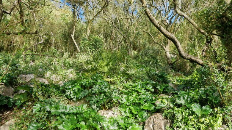 Für das Mittelmeer typische Vegetation im Naturpark Upper Rock Nature Reserve