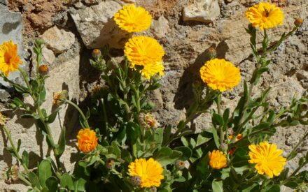 Reisetipps Frühling: Urlaub im Frühjahr in Spanien