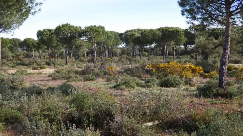 Nationalpark Doñana bei El Rocío