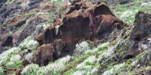 Anaga-Gebirge (Teneriffa)