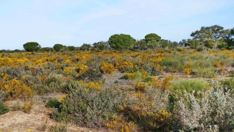 Nationalpark Doñana